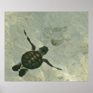 Baby-Meeresschildkröte, die heraus zum Meer Poster