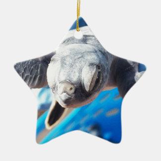 Baby-Suppenschildkröte Keramik Stern-Ornament