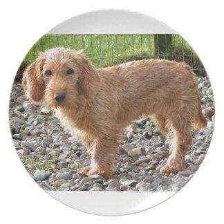 Basset Fauve de Bretagne Dog Melaminteller