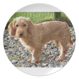 Basset Fauve de Bretagne Dog Party Teller
