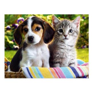 Beagle-Welpe und graues Kätzchen Postkarte