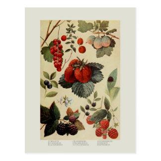 Beeren Postkarte