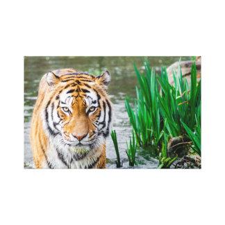 Bengalische Tiger-Leinwand Leinwanddruck