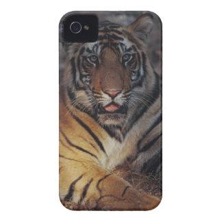 Bengalischer Tiger CUB iPhone 4 Case-Mate Hüllen
