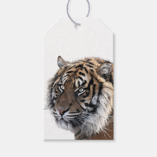 Bengalischer Tiger Geschenkanhänger