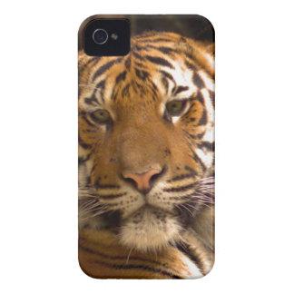 Bengalischer Tiger iPhone 4 Cover