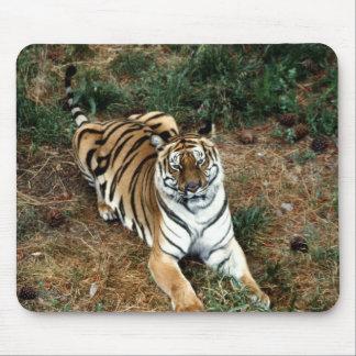 Bengalischer Tiger Mauspad