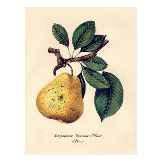Bergamotte Crassane d'Hiver (Birne) Postkarte