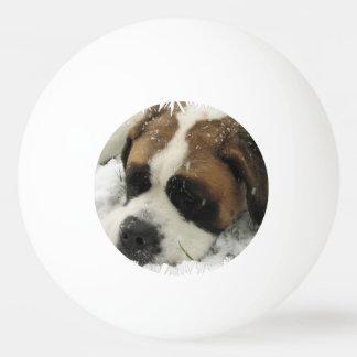 Bernhardiner-Hund Tischtennis Ball