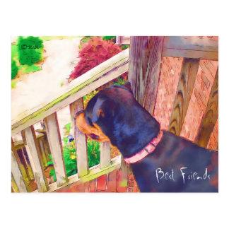 Beste Freund-Tierarzt-Erinnerung Postkarte