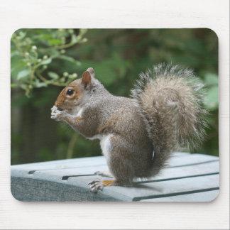 Besuchseichhörnchen-Mittagessen Mousepad