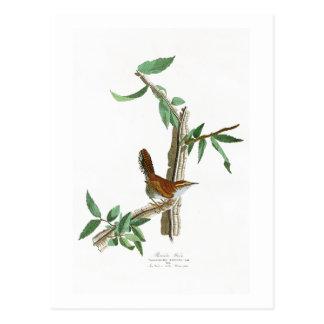 Bewicks Zaunkönig-John James Audubon-Vögel von Postkarte