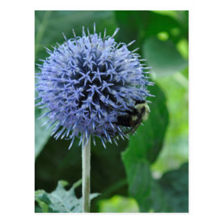 Biene auf Blume Postkarte