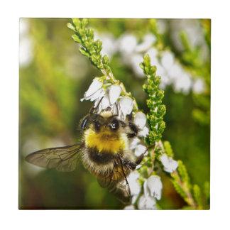 Biene auf glücklicher weißer Heide Keramikfliese