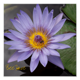 Biene haben Plakat