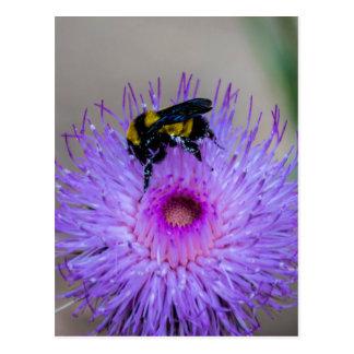 Bienen-bestäubenWildblumen Postkarte