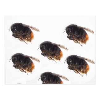 Bienen Postkarte