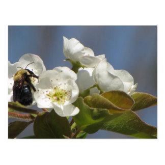 Bienen-Postkarte Postkarte