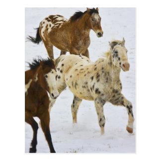 Big Horn-Berge, Pferde, die in den Schnee 4 laufen Postkarte