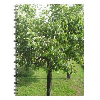 Birnenbaum mit Grün-Blätter und roten Früchten Notizblock