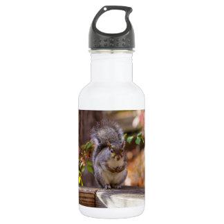 Bitten des Eichhörnchens Trinkflasche