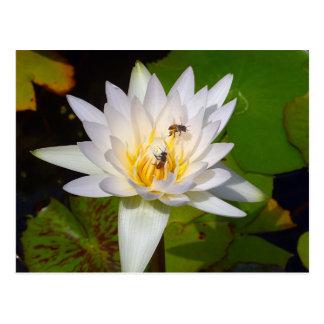Blasse thailändische Lotos-Blume Postkarte