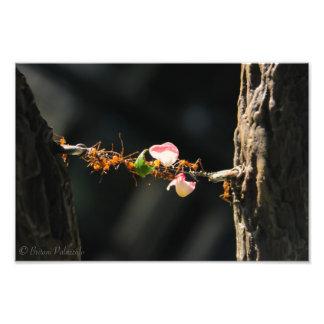 Blatt-Schneider-Ameisen Kunstphoto