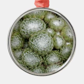 Blätter eines Spinnennetzhausporrees, Sempervivum Rundes Silberfarbenes Ornament