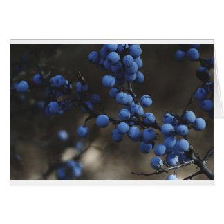 Blaubeere Grußkarte