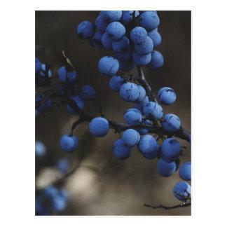 Blaubeere Postkarte