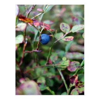 Blaubeere Postkarten