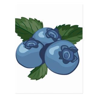 Blaubeeren Postkarte