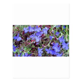 Blaue Blume in Kalifornien Postkarte
