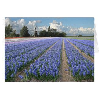 Blaue Hyazinthen Feld und Windmühle in Holland Karte