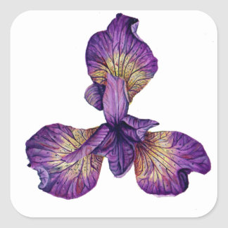 Blaue Iris Siberica Blume Quadratischer Aufkleber