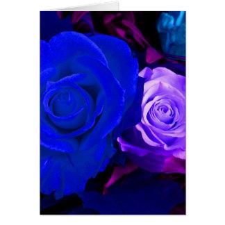 Blaue lila Rose