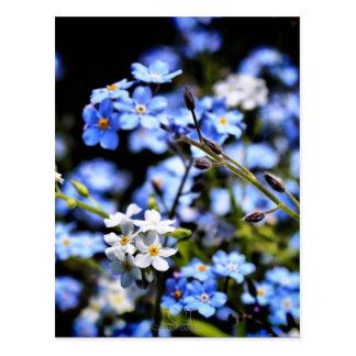 Blauer Frühling Postkarte
