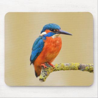 Blauer orange Eisvogel-Vogel Mauspads