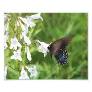 Blauer Schmetterling und weiße Wildblumen Foto Drucke