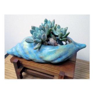 Blauer Succulent im Seashell durch saftige Postkarte