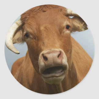 blöde kuh runder aufkleber