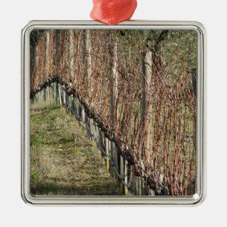 Bloßes Weinbergfeld im Winter. Toskana, Italien Quadratisches Silberfarbenes Ornament