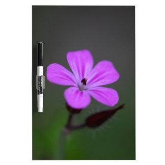 Blume des Kraut-Roberts, Pelargonie robertianum. Whiteboards