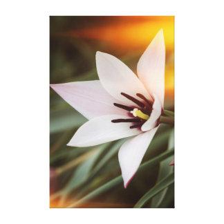 Blume im Garten Leinwanddruck
