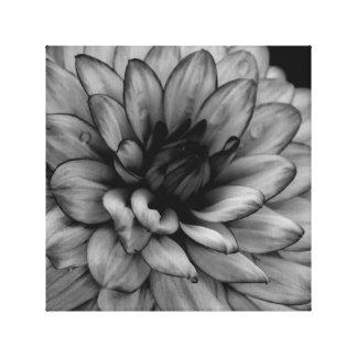 Blumen-Dahlie Leinwanddruck