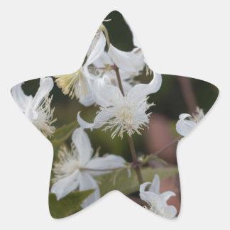 Blumen der Reisend-Freude (Clematis brachiata) Stern-Aufkleber