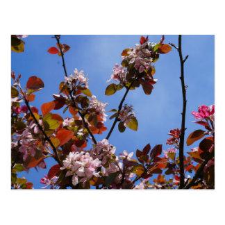Blumen des Frühlings Postkarte
