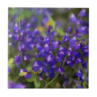 Blumen des MilkwortPolygalamajors Keramikfliese