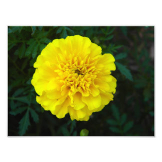 Blumen-Druck Fotografischer Druck