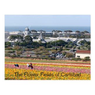 Blumen-Felder von Karlsbad-Postkarte Postkarte